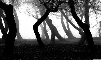 Ragazzina autistica persa nel bosco