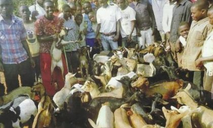 465 capre per uscire dallo spettro della povertà