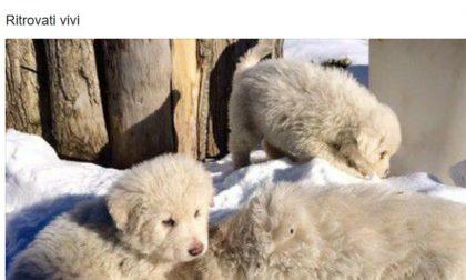Hotel Rigopiano: Salvati i 3 cuccioli