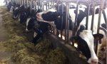 Montichiari: «Le nostre stalle stanno chiudendo»