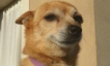 Montichiari, dopo tre anni ritrova il cane