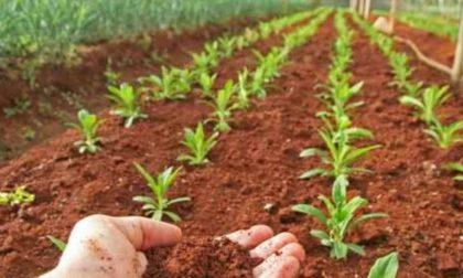 Nuovo contratto per gli agricoltori di Brescia