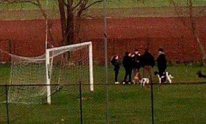 Padroni irrispettosi: portano i cani nelle aree di divieto