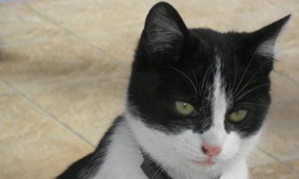 «Simpatiche zampette», votate il vostro amato animaletto