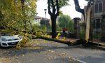 Albero cade su auto in corsa LE FOTO