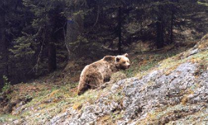 Alto Garda: avvistato un orso