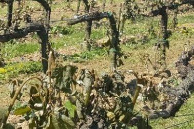 Coldiretti: sul Garda gelate a macchia di leopardo