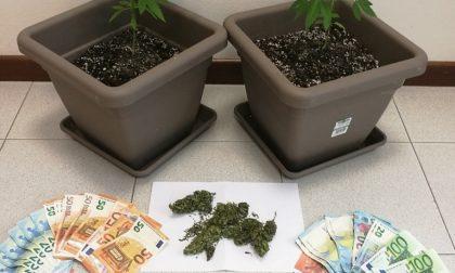 Denunciati due veronesi per spaccio di marijuana