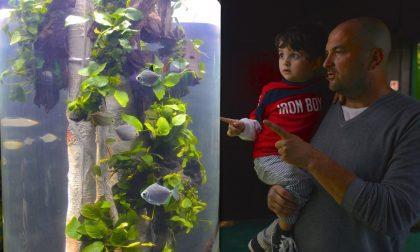 Amazzonia e squalo chitarra in arrivo a Sea Life