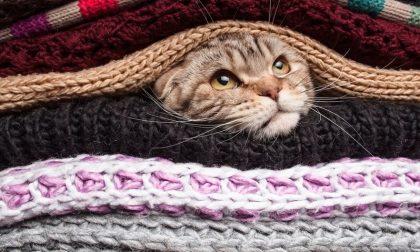 Freddo, freddissimo ancora per un po'