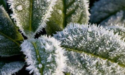 Gelo, dimezzate le consegne di frutta e verdura