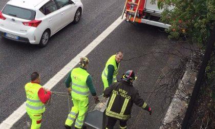 I pompieri di Desenzano salvano un cane sull'A4