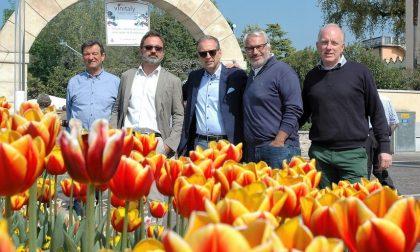 I tulipani del Sigurtà a Bardolino
