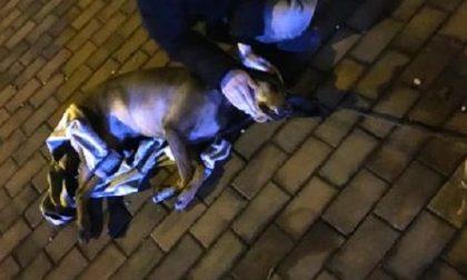 Quel cane è stato lasciato morire?