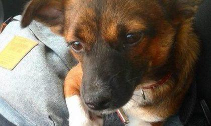 Segnalazione cane scomparso da condividere