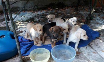 Sette cuccioli cercano casa