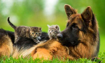 """""""Simpatiche zampette"""", come votare il vostro animale"""
