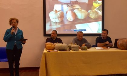 Esposte zucche ad Asola tra storia e degustazione