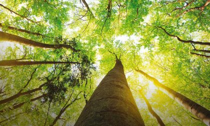 Giornata europea dei parchi, in Lombardia il 25% del territorio è area protetta
