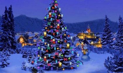 Alberi di Natale ecco come salvarli