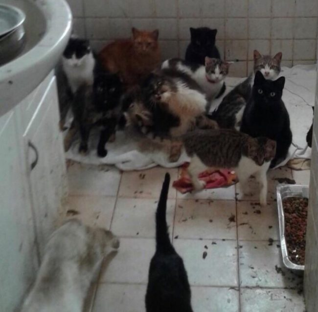 Sequestrati Cani E Gatti Segregati In Totale Degrado Brescia
