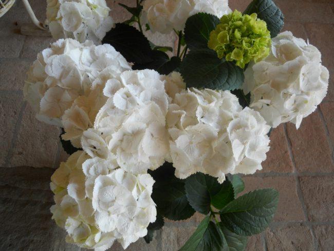 Gardenie e ortensie per combattere la sclerosi multipla