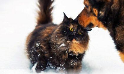 Come proteggere gli animali dal freddo