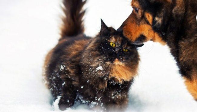 gatto-cane-650x370.jpg?x41463