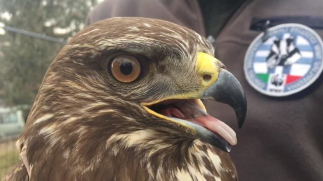 I rapaci feriti dai cacciatori sono tornati a volare