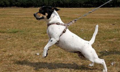 Nuovo regolamento per condurre gli animali a Travagliato