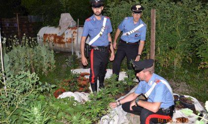 Piantagione di oppio e marijuana in cascina, due arresti a Remedello