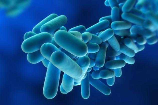 Legionella a Cazzago: un ordinanza per prevenire la diffusione