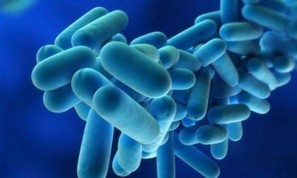 Polmonite da legionella ad Asola: le condizioni ambientali potrebbero favorire la proliferazione