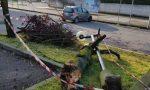 Temporale a Castenedolo l'albero si porta via il palo