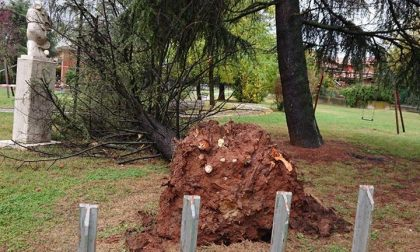 Maltempo anche a Castenedolo: albero cade e trancia i cavi della corrente
