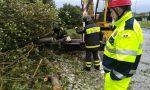Maltempo a Capriano, caduti alberi sulla quinzanese