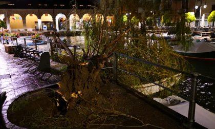 Abbattuto il celebre salice del Porto Vecchio di Desenzano
