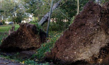 Alberi caduti e cavi elettrici tranciati, il maltempo non risparmia Calvisano