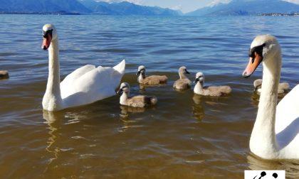 Acqua gialla a Desenzano: Arpa conferma valori fuori norma