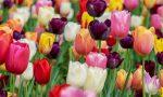 Bulbi di fiore contro la violenza sulle donne