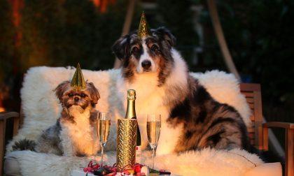 Capodanno da cani, ecco come tutelare gli amici a 4 zampe