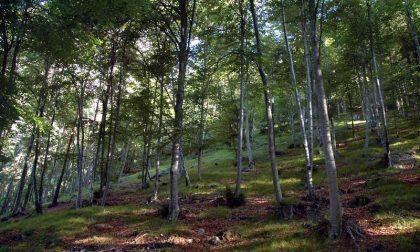 Fondi per i Consorzi forestali, ai bresciani 880mila euro