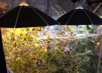 Coltivava marijuana in garage, arrestato quarantenne