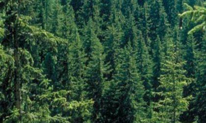 Il nuovo albero Spelacchio arriva dalla Lombardia (e paga Netflix)