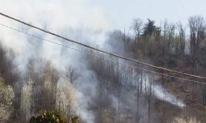 L'incendio boschivo a Provaglio è stato doloso