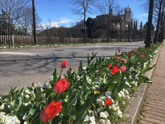 Castiglione delle Stiviere città dei fiori