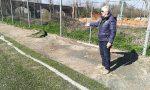 Distrutto dal maltempo, a quando i lavori allo stadio di Manerbio?