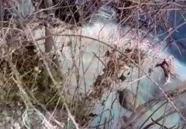 Calcinato, feci e carta igienica nel fiume Chiese, la denuncia del Comitato