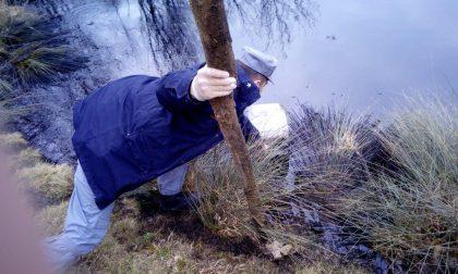 Trovato l'eco-criminale dello stagno di Serle