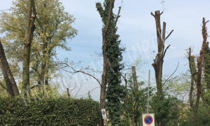 Potatura rami e taglio alberi pericolanti